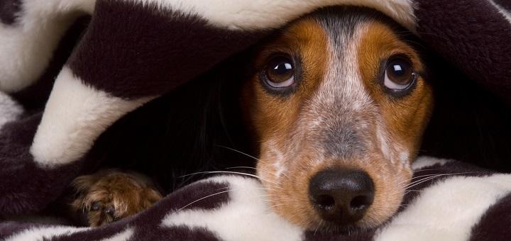 Jak pomóc psu przetrwać fajerwerki