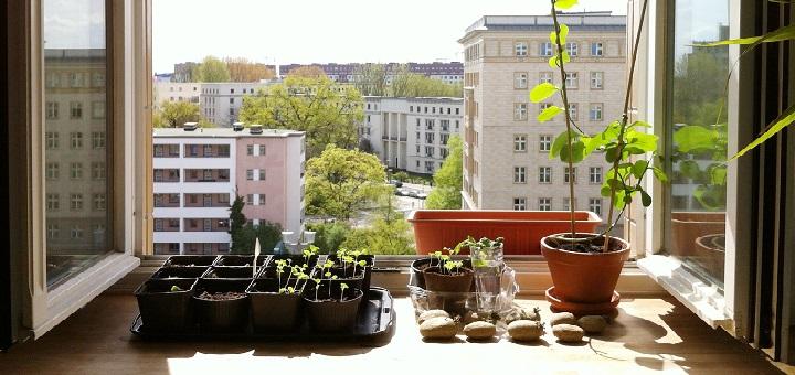 W Warszawie działa Schronisko dla Roślin
